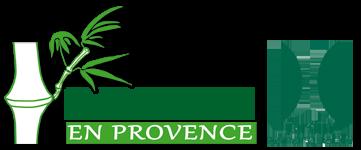 Bambous en Provence